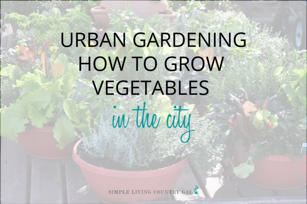Urban Gardening Options