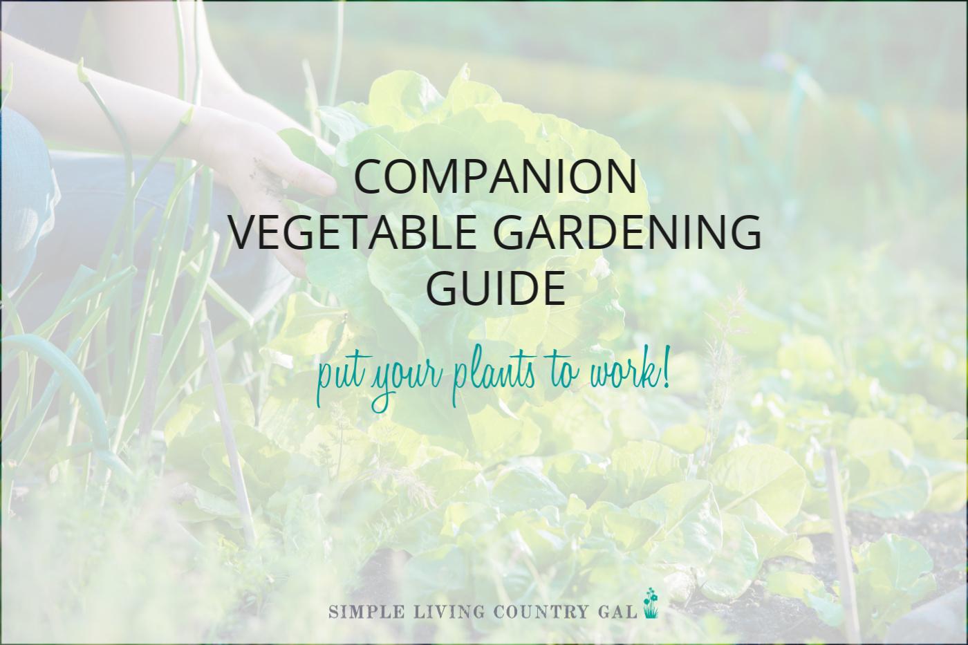 Vegetable Companion Planting Chart PDF