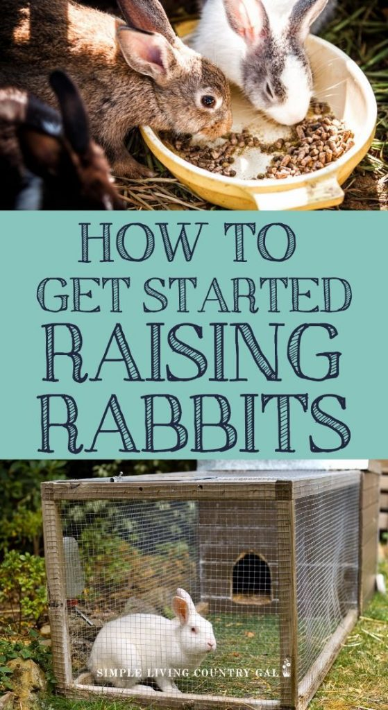a beginners guide to raising rabbits