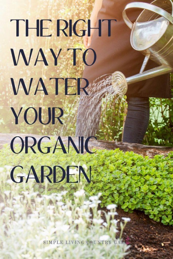 garden watering tips