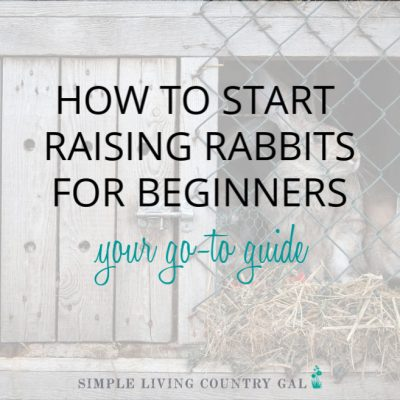 how to raise rabbits for beginners