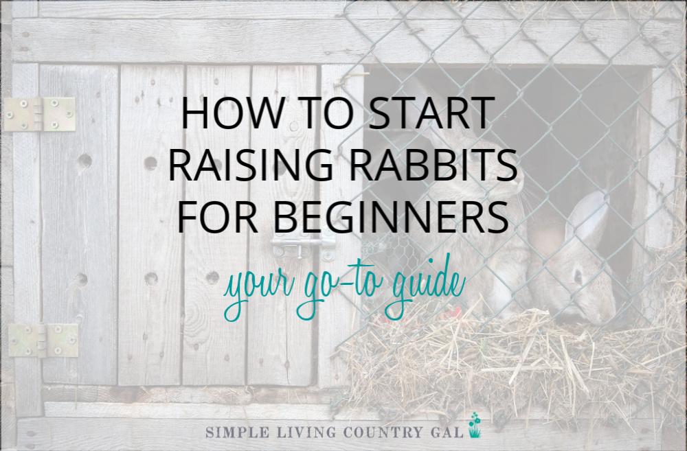 How to Start Raising Rabbits for Beginners