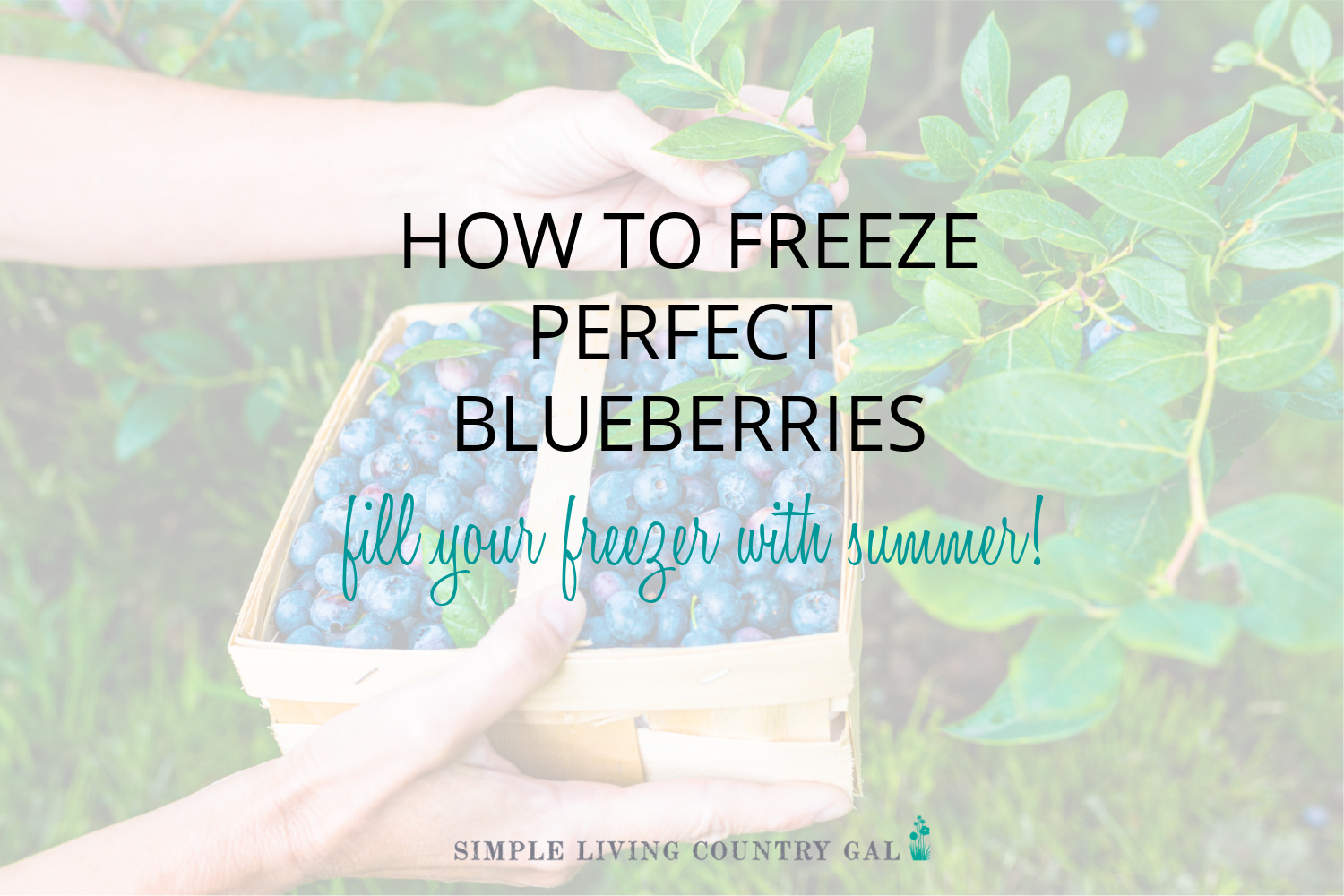 How to Freeze Perfect Blueberries Every Time