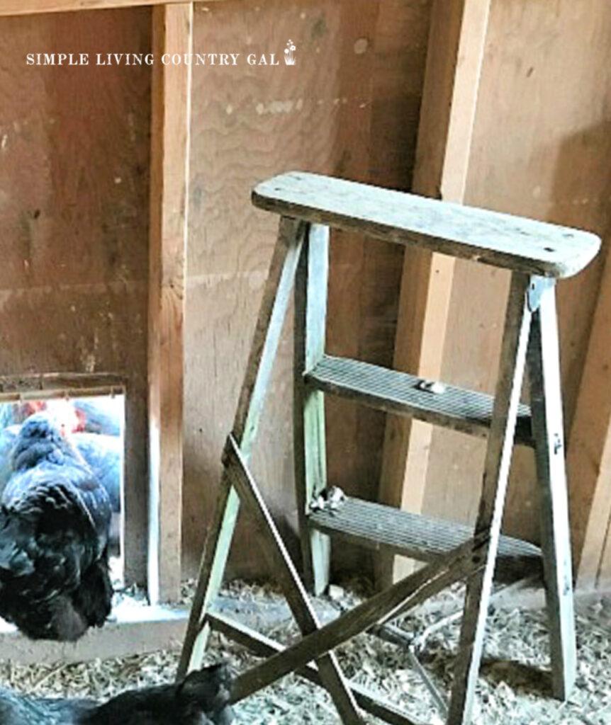ladder roost in a chicken coop