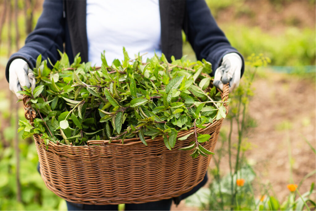 woman holding fresh herbs