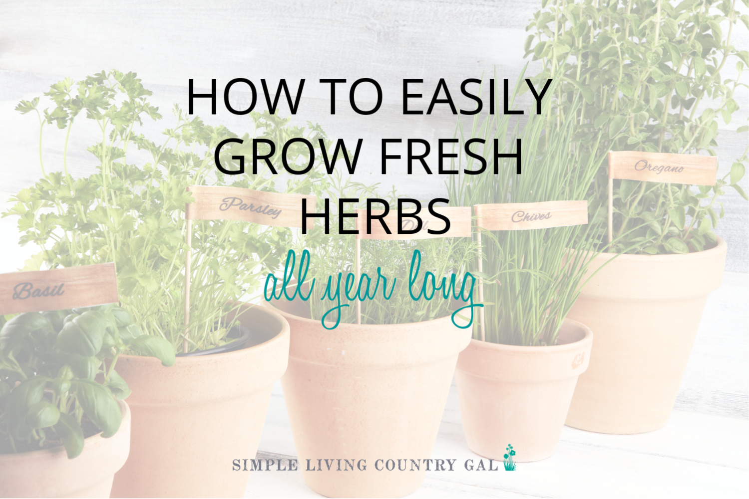 How to Grow Herbs in Pots