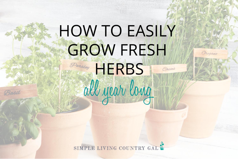 How to Grow Herbs in Pots