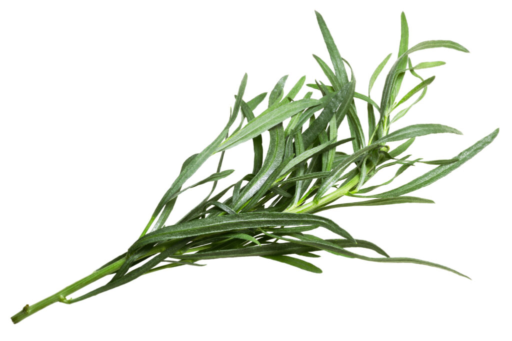 Fresh French Tarragon