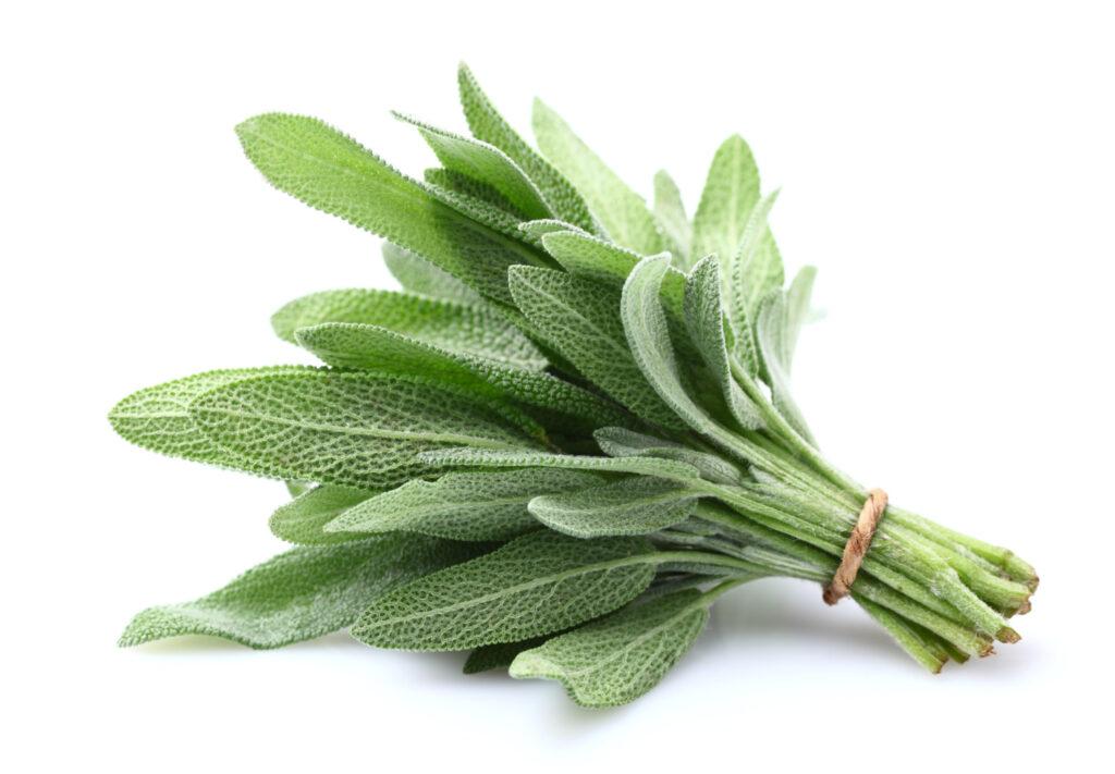 Sage plant