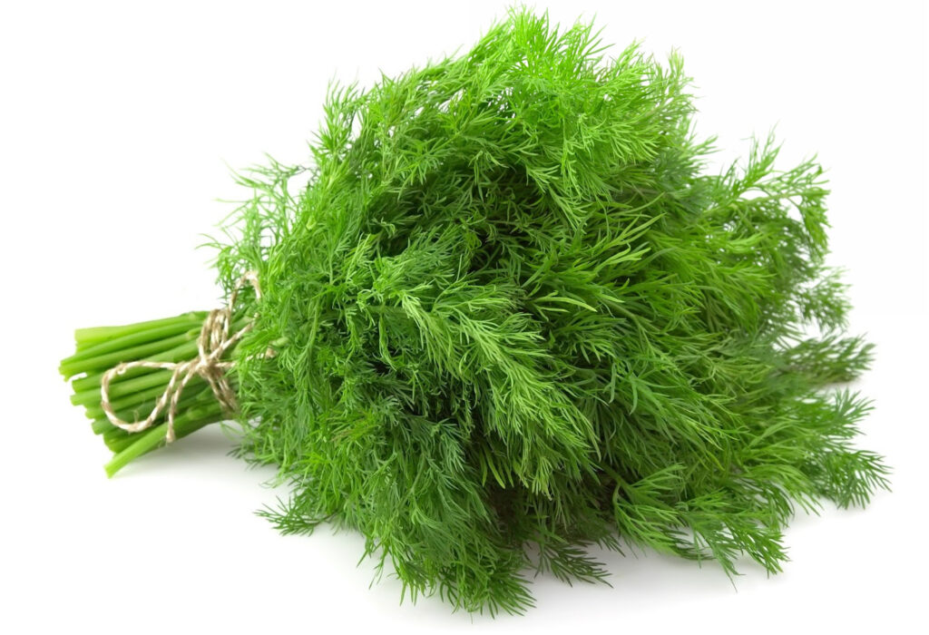 Fresh dill close up on white background