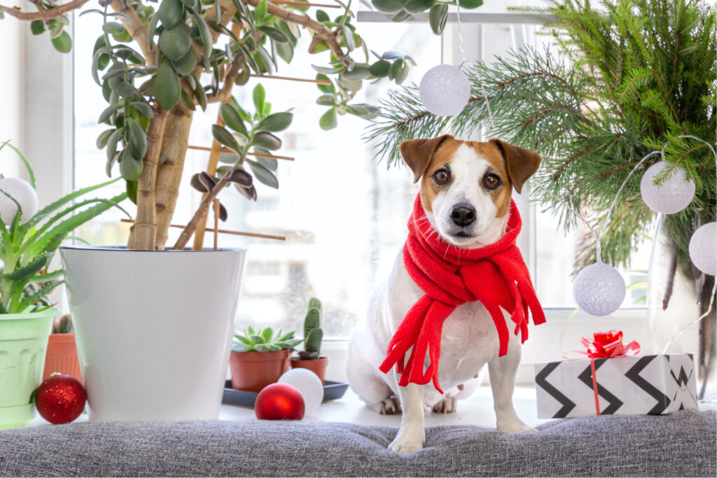 A puppy sitting by plants and garden gifts
