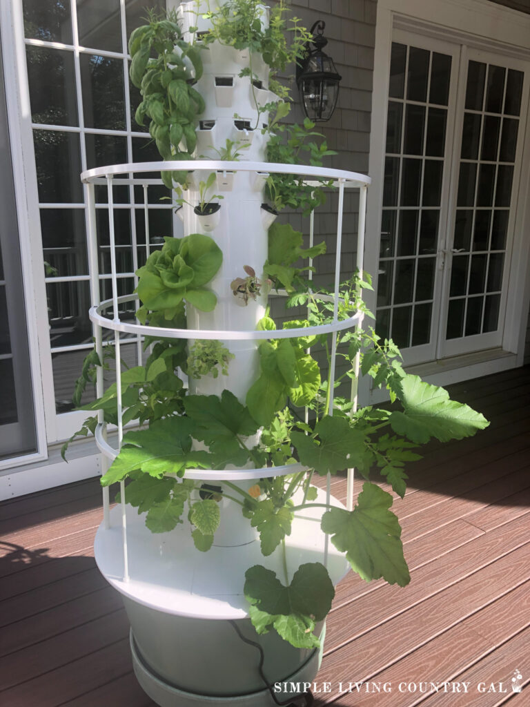 hydroponic indoor vegetable garden on a porch