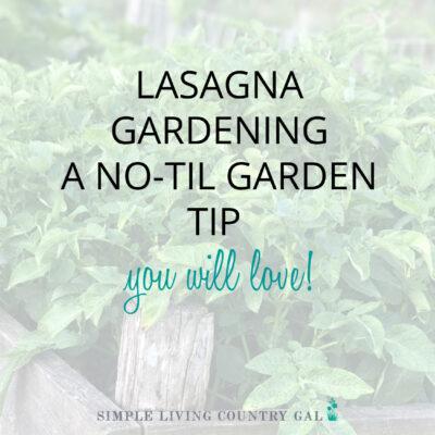 lasagna gardening for beginners