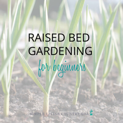 garlic growing in a square foot gardening for beginners