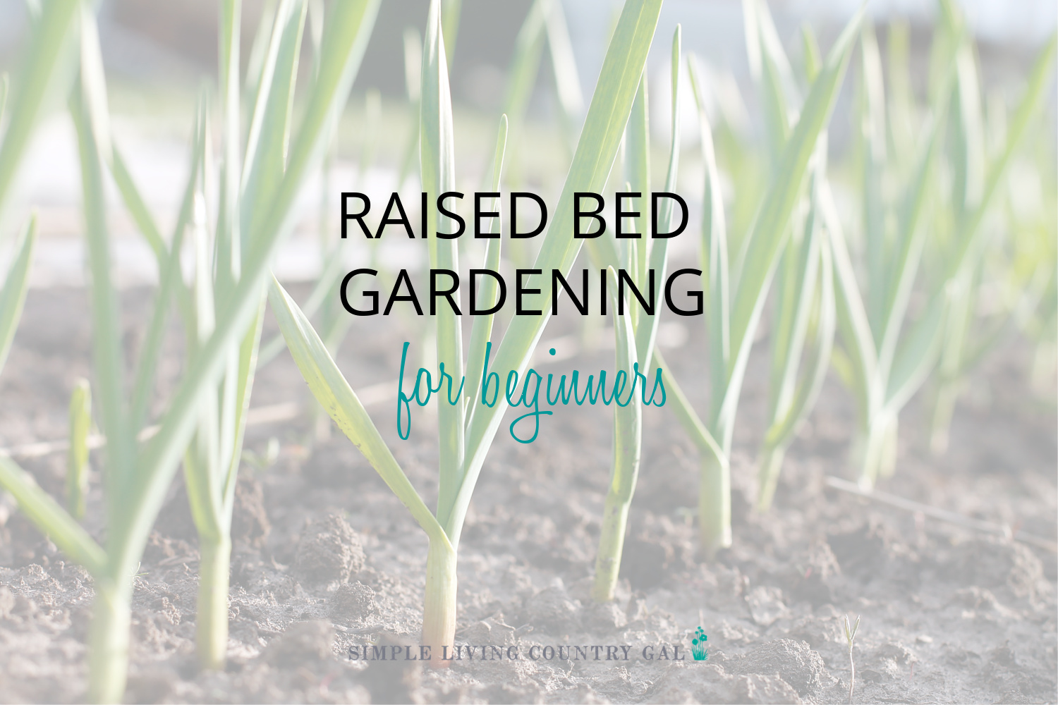 Square Foot Gardening for Beginners