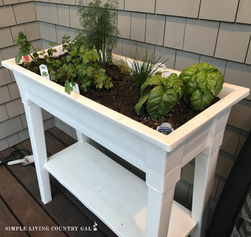 raised bed of herbs