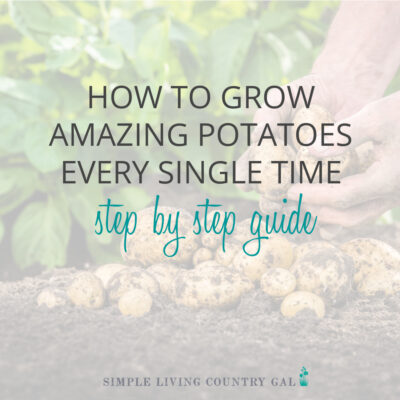 How to grow perfect potatoes year after year!