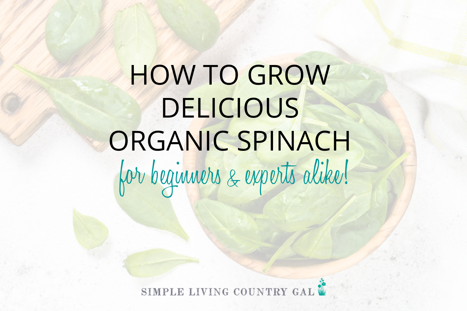 How to Grow Spinach for Beginners