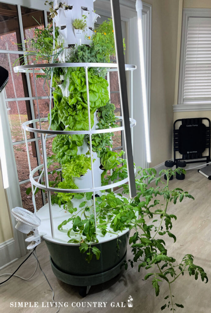 hydroponic garden full of fresh vegetables