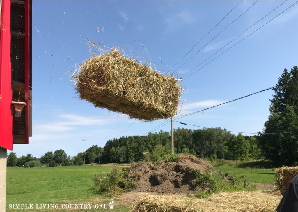 a hay bale tossed out of a red barn to a cart below. Difference between hay and straw