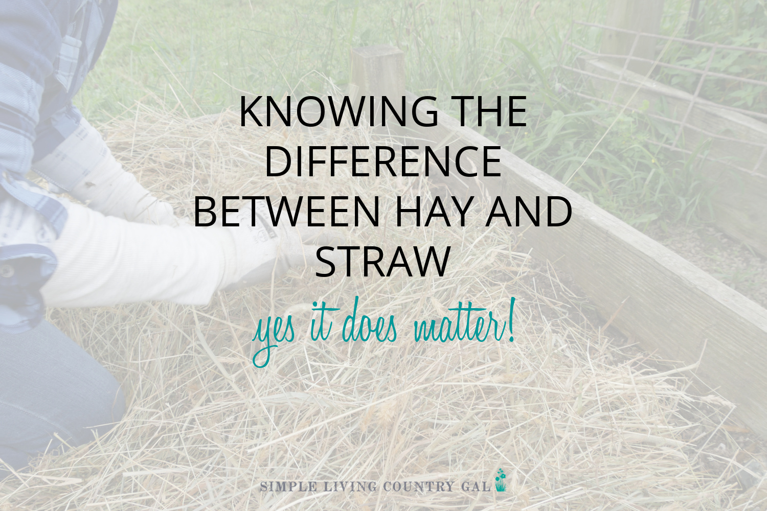 What is the Difference Between Hay and Straw?