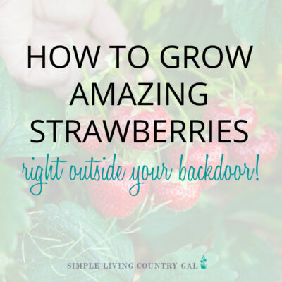 How to grow amazing strawberries every time!