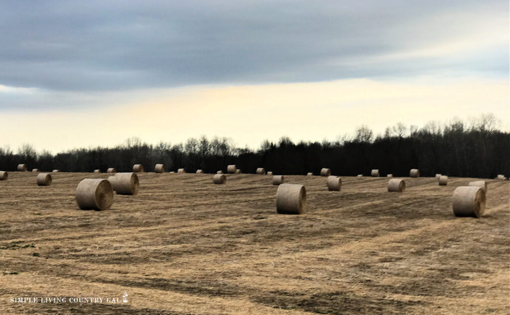 round hay bales in a spring pasture.