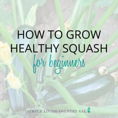 How to Grow Squash for Beginners
