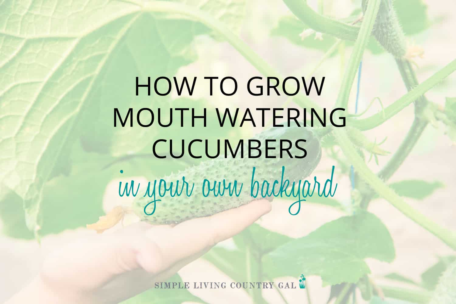 How to Grow Cucumbers for Beginners