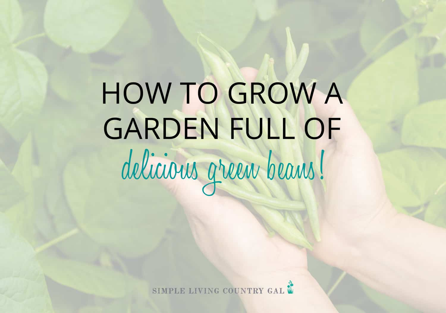 How to Grow Beans for Beginners