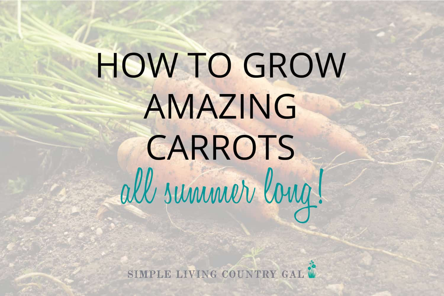 How to Grow Carrots for Beginners