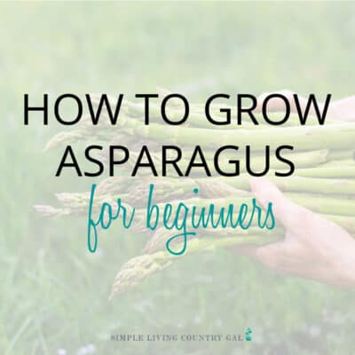 how to grow asparagus for beginners (2)