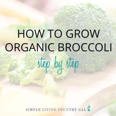 How to grow broccoli for beginners