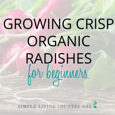 how to grow radishes for beginners